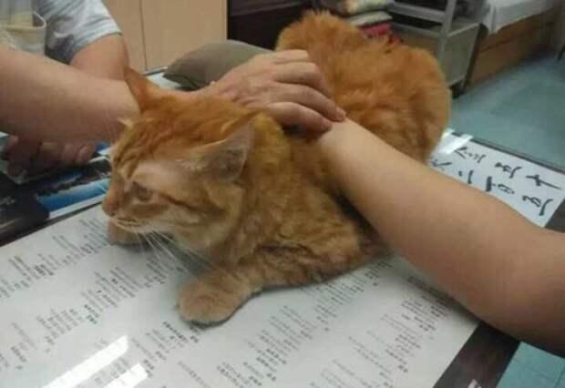 фото рыжего кота