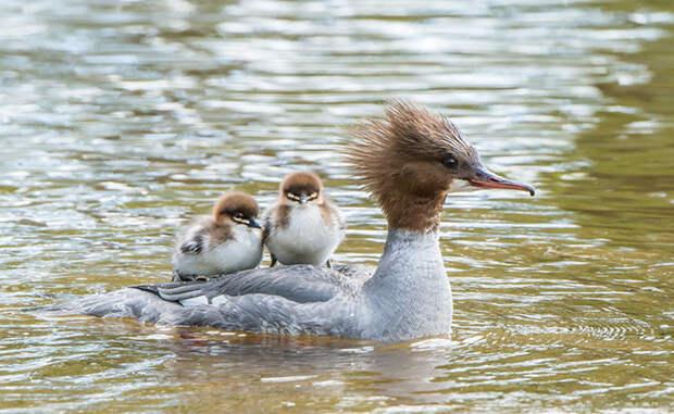 24.  красота, природа, птицы, фото