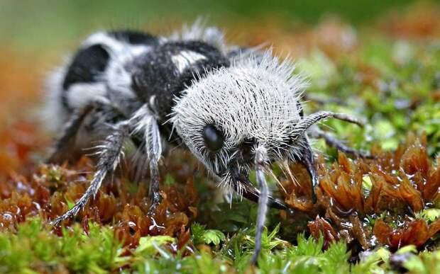 Самые интересные животные мира. Панда-муравей