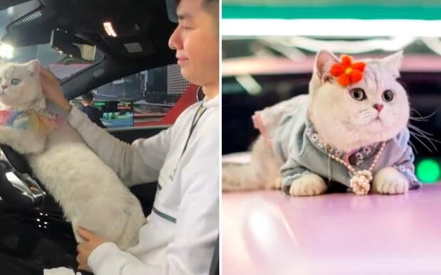 Хозяин сделал свою кошку моделью. Теперь она зарабатывает больше, чем люди