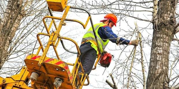 Деревья на Большой Академической спилили из-за ремонта водопровода