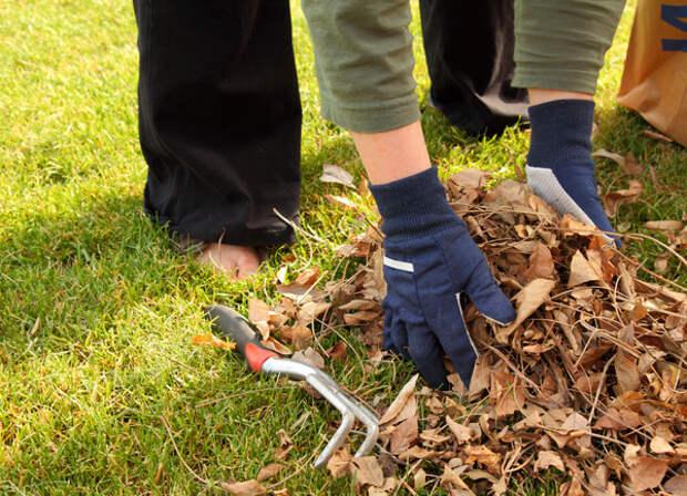 Очищать или не очищать от растительного мусора участок и прилегающие территории?