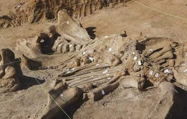 Техасец раскопал у себя на ферме скелет мамонта