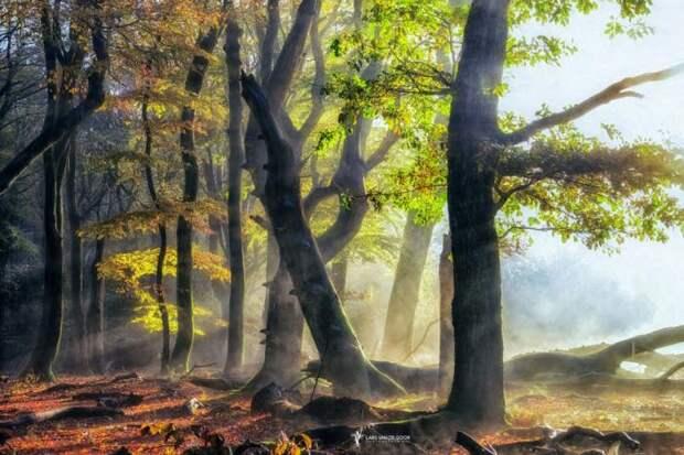 Лесные пейзажи из разных стран мира