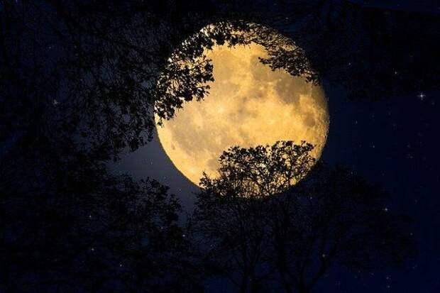 Лунный календарь садовода и огородника с 13 по 27 мая