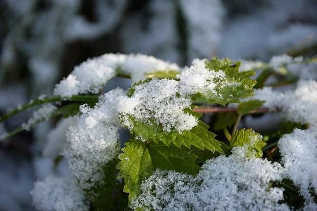 Некоторые регионы России уже в начале сентября накроет первый снег