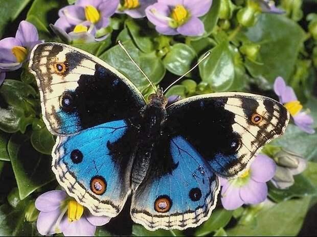 Полосатые бабочки