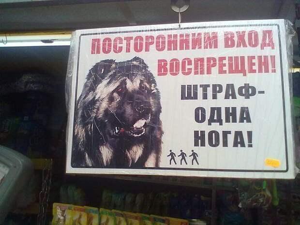 Немного о собаках картинки, собаки