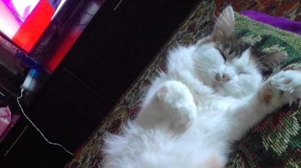 К подъезду прибилась грязная кошка со сломанной лапой. Девушка встречала ее каждый день, но проходила мимо…