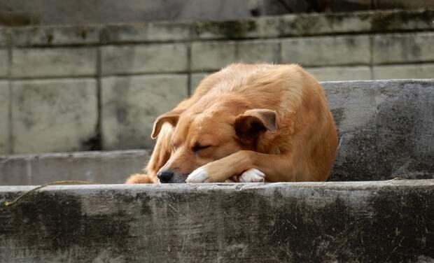 В Краснодаре мужчина открыл стрельбу по бездомной собаке