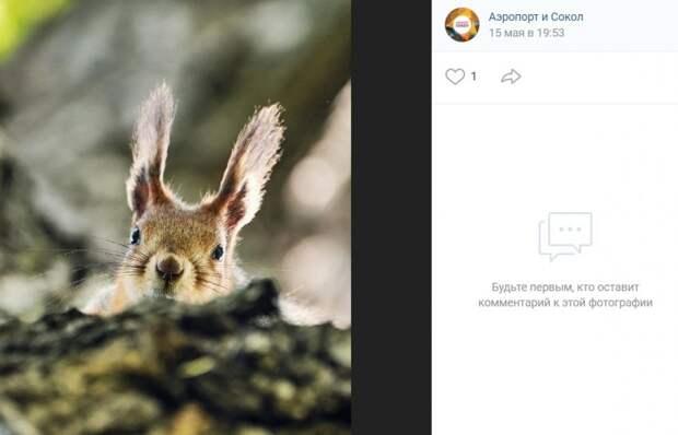 Фото дня: белке из Ленинградского парка провели персональную фотосессию