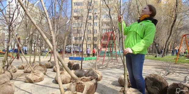 Больше тысячи зеленых насаждений посадят в Войковском этой осенью