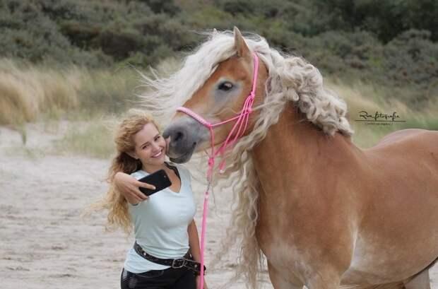 Жительница Голландии показала миру свою лошадь с поразительно длинной гривой, и она будто из сказки голландия, девушка, животные, красота, лошадь, фото, шевелюра