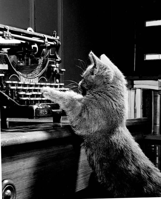 Уолтер Чандоха – человек, который 70 лет фотографировал кошек   34