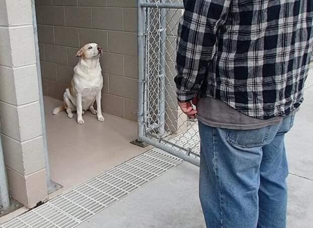 Песик из приюта заплакал, когда узнал стоящего перед ним человека