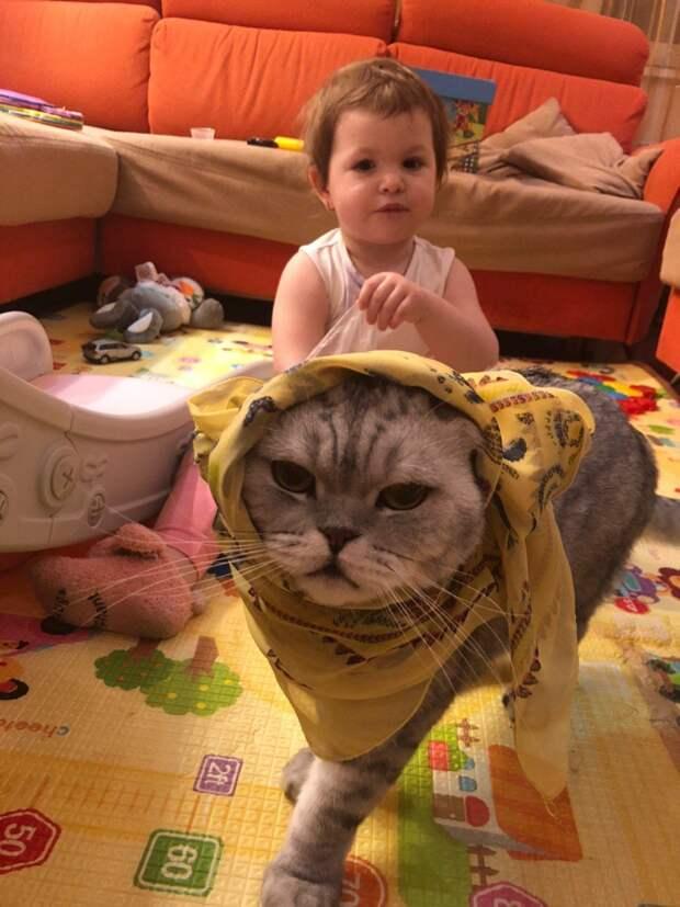 Почему родной кот нашей семье дороже десятка якобы друзей