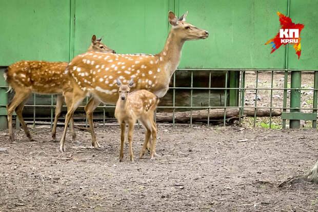 Бэби-бум Большереченского зоопарка