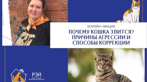 Бесплатная онлайн-лекция зоопсихолога, посвящённая психологии кошек
