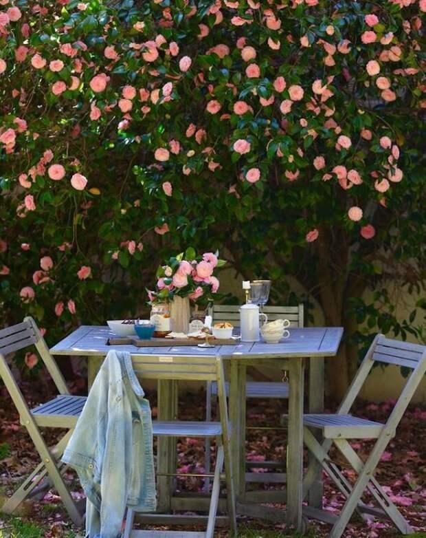 В саду растет розовая камелия, под которой Кортни любит устраивать чаепития. Для статьи использованы фотографии из Инстаграм-аккаунта Кортни @frenchcountrycottage и сайта frenchcountrycottage.net