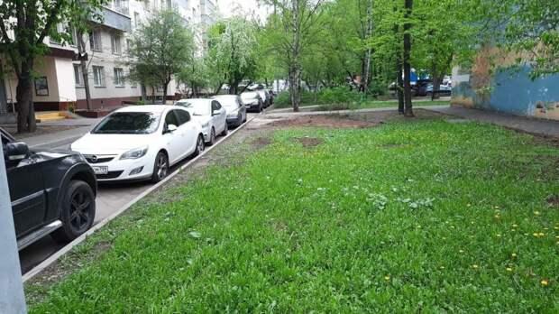 Коммунальщики расчистили двор на Сормовской от обломков рухнувшего дерева