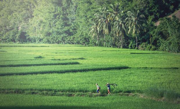 Image of beautiful rice field by Sasin Tipchai on 500px.com