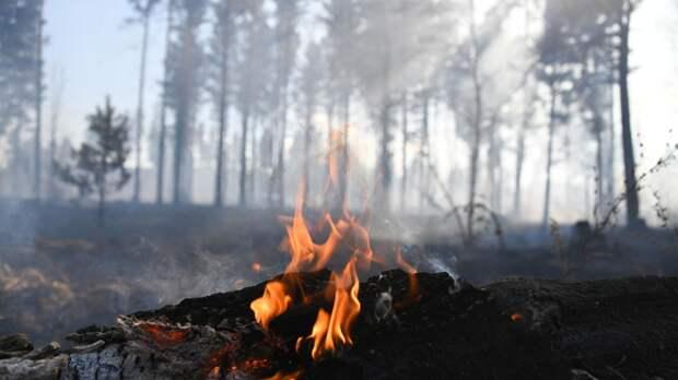 Власти Челябинской области прокомментировали ситуацию с лесными пожарами