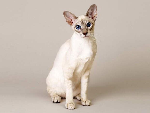 Самые красивые кошки в мире