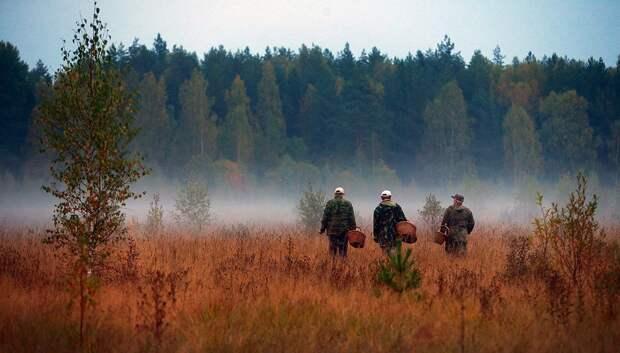 В Тверской области обнаружили тело пропавшего грибника