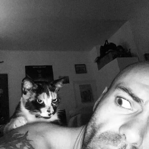 20 фотографий, которые показывают, что коты — не всегда милые и пушистые