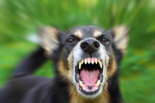 Собака взяла в заложники нижегородскую семью