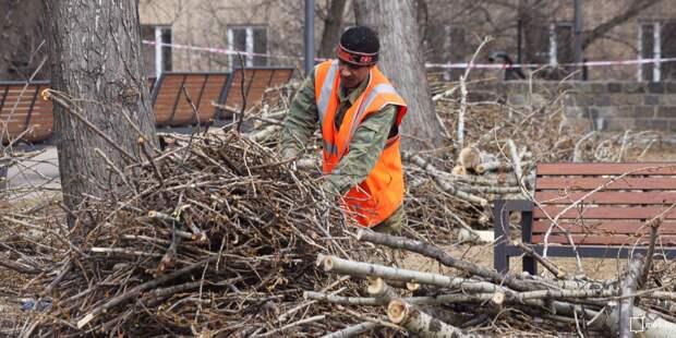На Менжинского обрезали ветки деревьев после жалоб жителей
