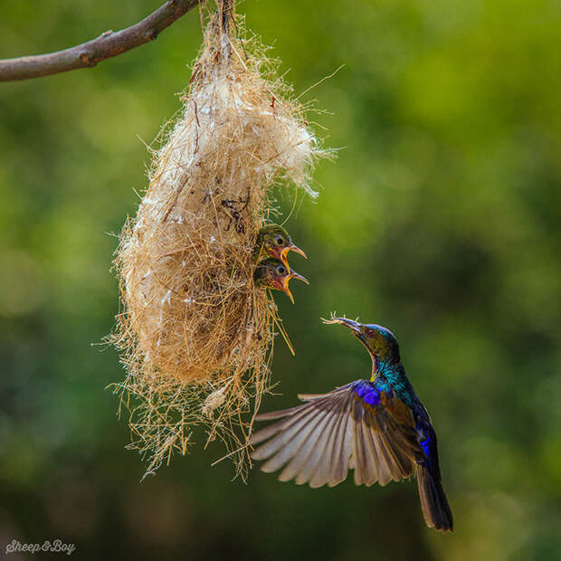 18.  красота, природа, птицы, фото