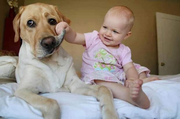 3. Борьба с аллергией и астмой дети, домашние животные, собака, собаки