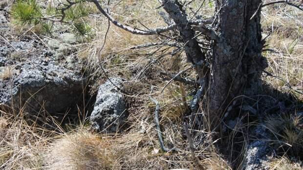 Кузбассовцы опубликовали в соцсетях фото гигантских следов непонятного происхождения