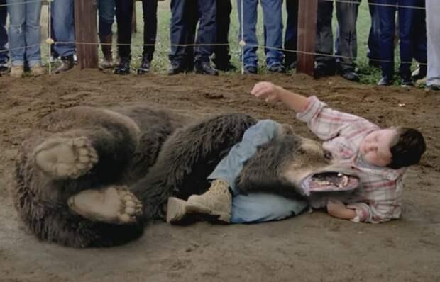 Под запретом: борьба с медведями.
