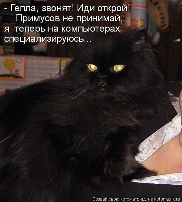 Котоматрица: - Гелла, звонят! Иди открой! Примусов не принимай, я  теперь на компьютерах  специализируюсь...
