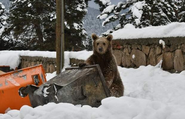 Новые фотографии животных, которые стоит посмотреть