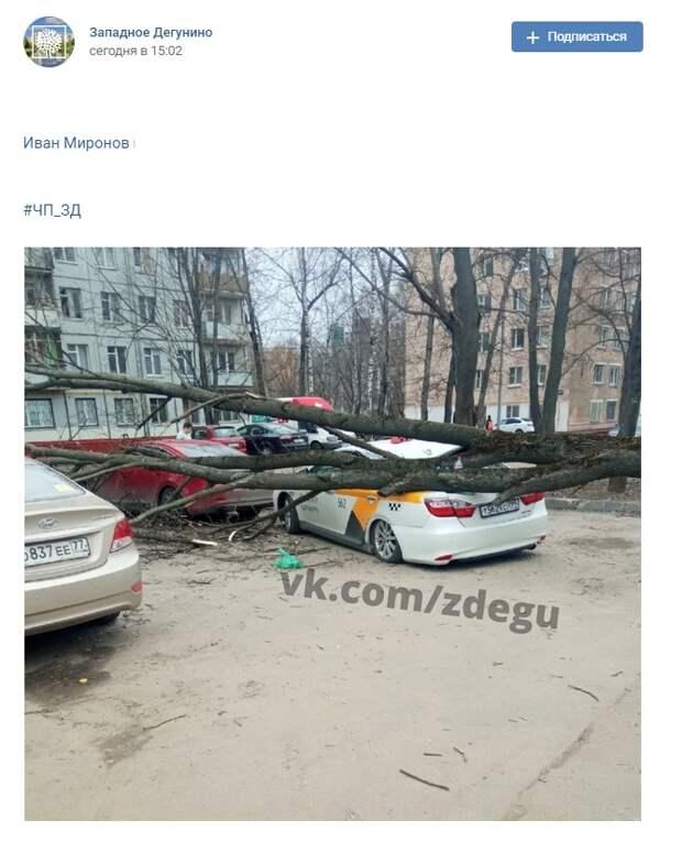 На Коровинском шоссе на машину упало дерево