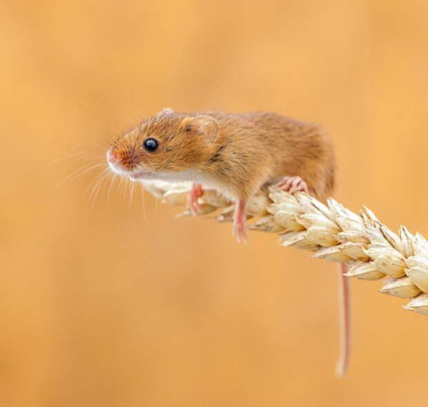 Насколько милыми могут быть мышки