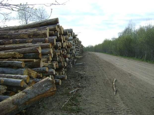 Россияне призвали запретить массовую вырубку леса в стране в угоду коммерческим структурам