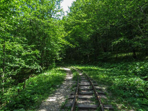 Лес постепенно поглощает железную дорогу.