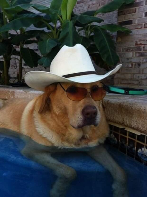 Собаки - жизнь человека украшаки (33 фото)