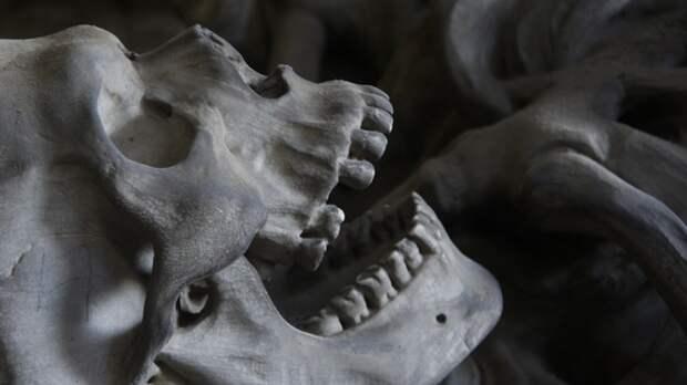 Скелет мужчины нашли на улице в Оренбурге