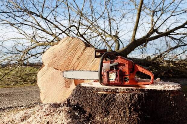 На Абрамцевской спилили ветки деревьев по просьбам жителей