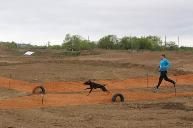 Ползли по рву с водой и преодолевали барьер: испытания для людей и собак прошли в Приморье