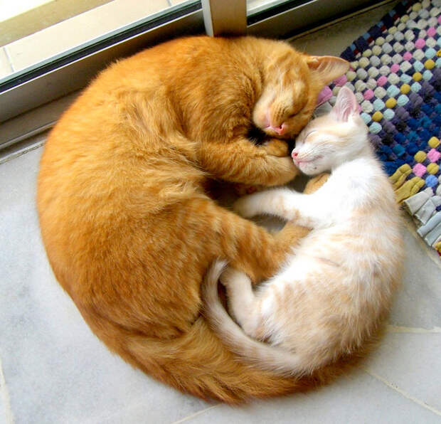 Кошачий клубок любви. Фото