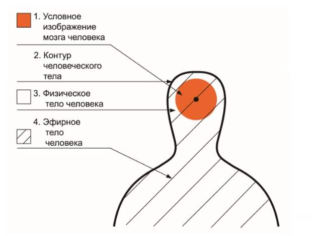 Энергоинформационная модель человека.