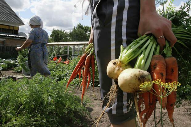 Новые кулаки. Чиновники ищут денежные излишки в огородах россиян
