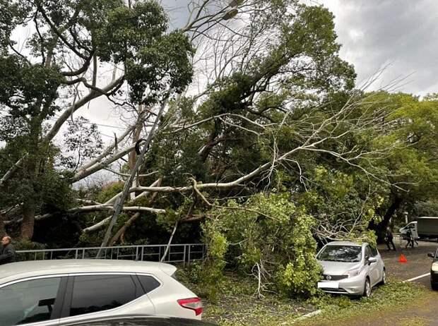 В Сочи сильный ветер повалил четыре дерева