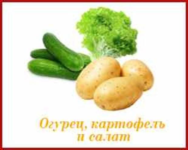огурец картофель и салат не сажайте рядом